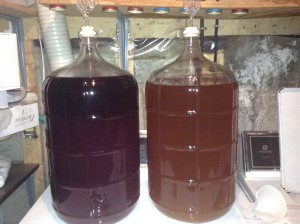 Cider & Wine in a Carboy