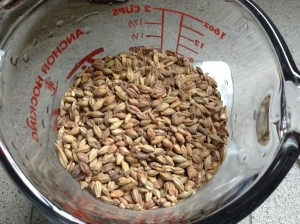 Victory Malt (Our Aromatic Grain)