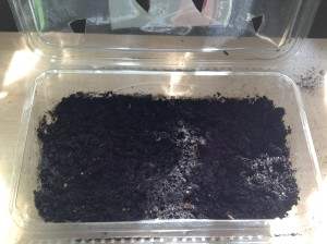 Fertile Soil in Salad Container